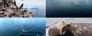 Big Fish Antarctica video stills